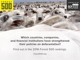Accelerating the implementation of corporate zero deforestation commitments