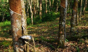 GPSNR unveils first ever collective grievance mechanism in the natural rubber industry