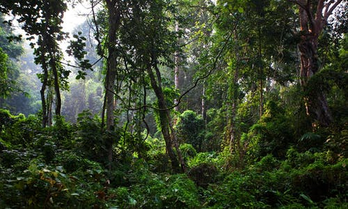 CDP launches world's first disclosure framework for banks integrating climate and forest impact