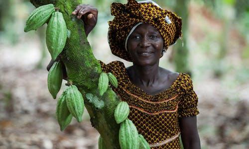 More dough for cocoa farmers