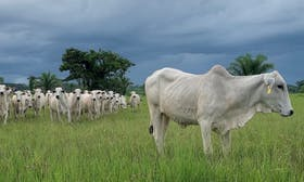&Green Fund makes investment in Brazilian Group Roncador for integrated sustainable soy cattle production at scale