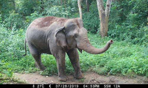 Unsustainable natural rubber poses major threat to wildlife and people