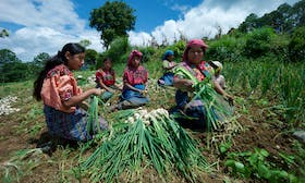 Global food systems must be disrupted and changed—new IFAD report