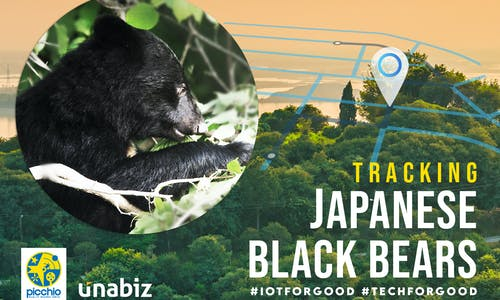 Picchio Partners with UnaBiz to Track Japanese Black Bears