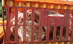 Dairy Farm Group egg supplier reported to the Singapore Food Agency following investigation