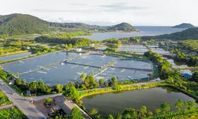 Hatch launches aquaculture and alt-seafood pre-accelerator in Singapore