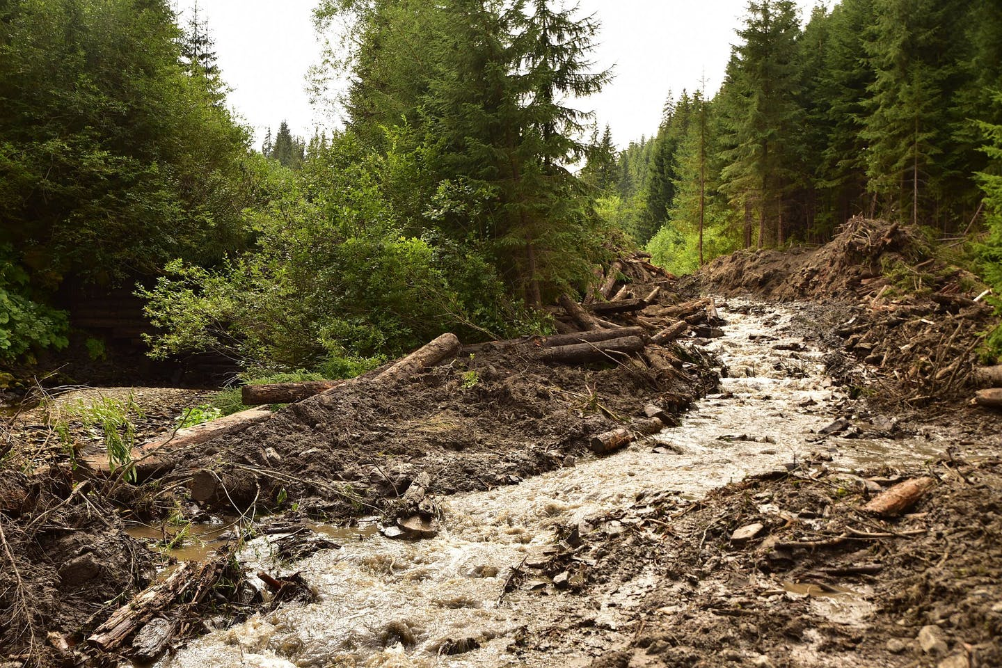 New WWF analysis reveals the possibility of freeing at least 7800 km of rivers in the region from unnecessary and environmentally harmful barriers