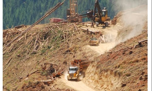 Free management briefing on what business can do to tackle deforestation