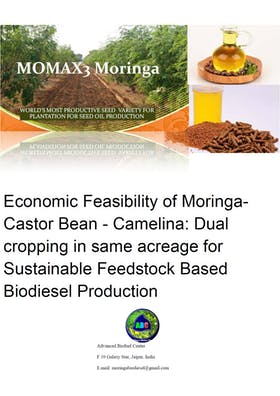 Economic Feasibility of Moringa- Castor Bean - Camelina: Dual cropping in same acreage for Sustainable Feedstock Based Biodiesel Production