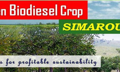 Economic Feasibility of Non-Food Biodiesel Production: Part 3