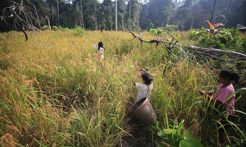 Indonesia approves coal road project through highly biodiverse forest