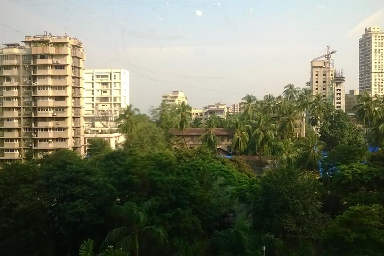 mumbai trees