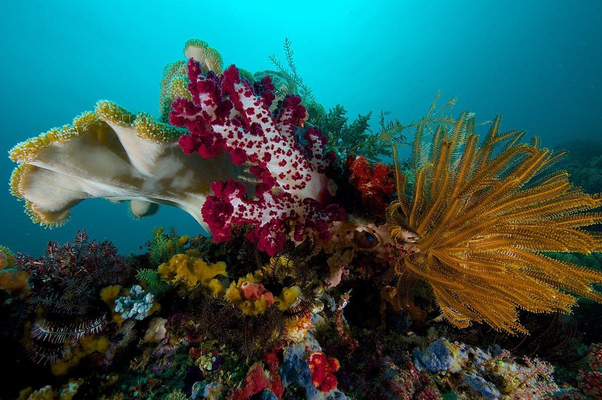 Raja Ampat coral reef