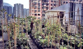 Governments urged to invest more in green cities to beat coronavirus slump