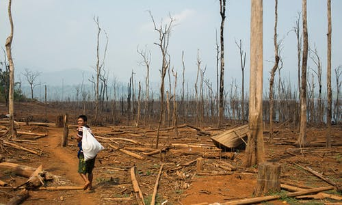 Myanmar risks losing forests to oil palm
