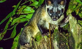 As Covid-19 pandemic deepens, global wildlife treaty faces scrutiny