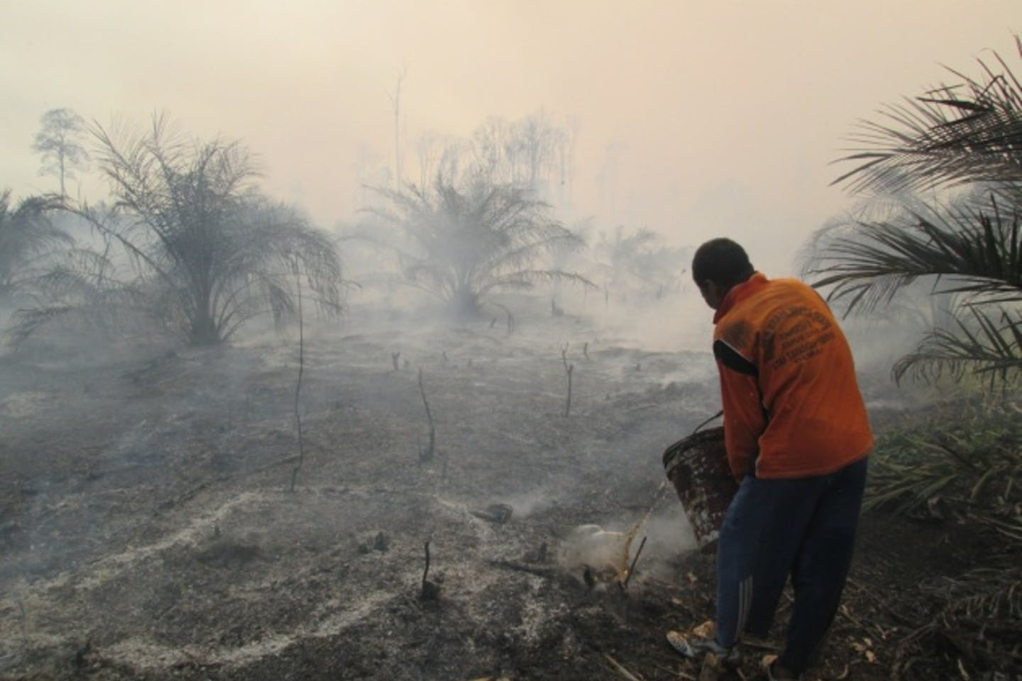 Greenpeace report, forest fires, Indonesia