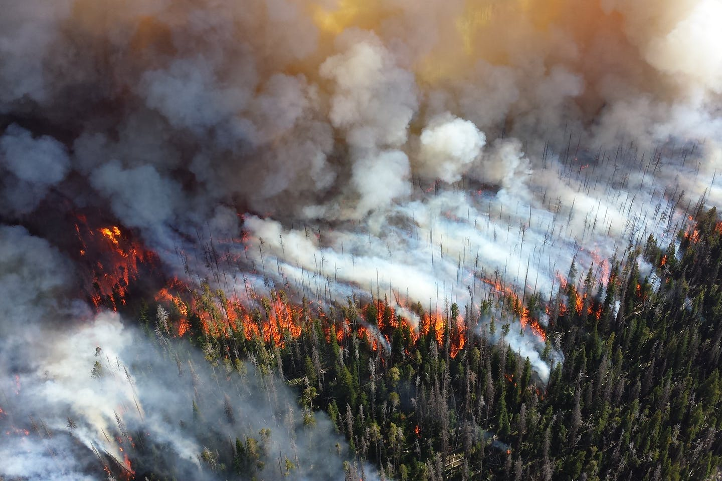 Wildfires ravaging the American west coast.
