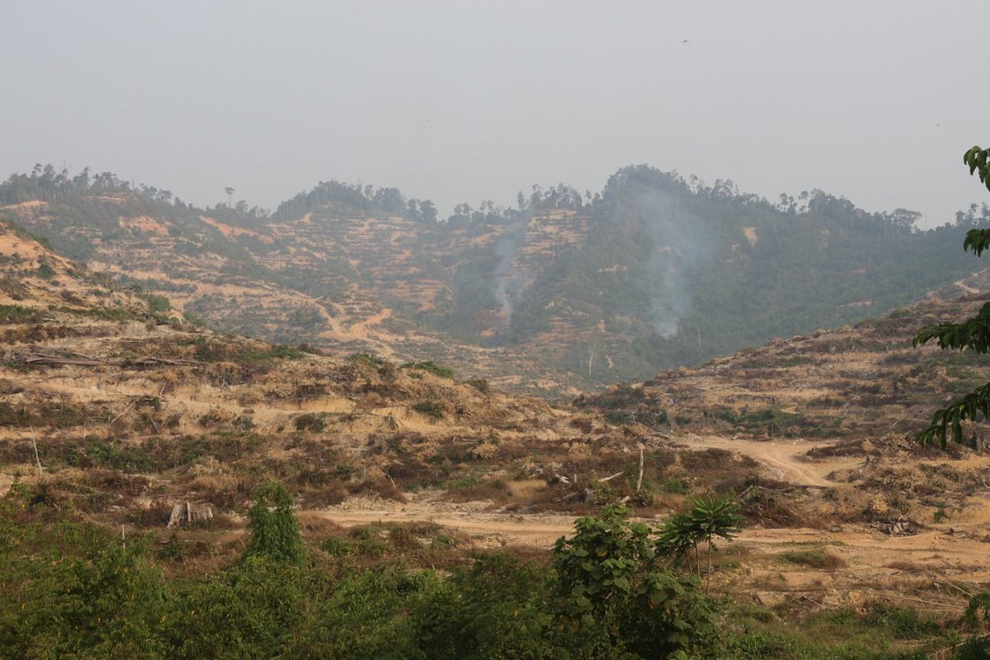 burning of forests malaysia