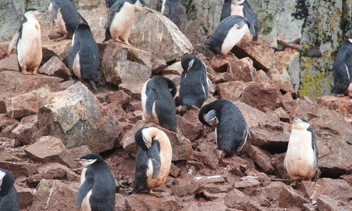 Frustration as Antarctic conservation summit fails to approve marine sanctuaries