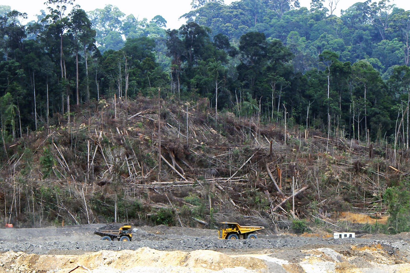 Clearing forrests for the Lumbung Coal Mine, Central Kalimantan, Indonesia.