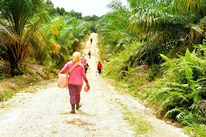 Women in palm oil