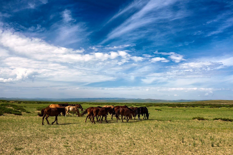 Mongolia's grasslands