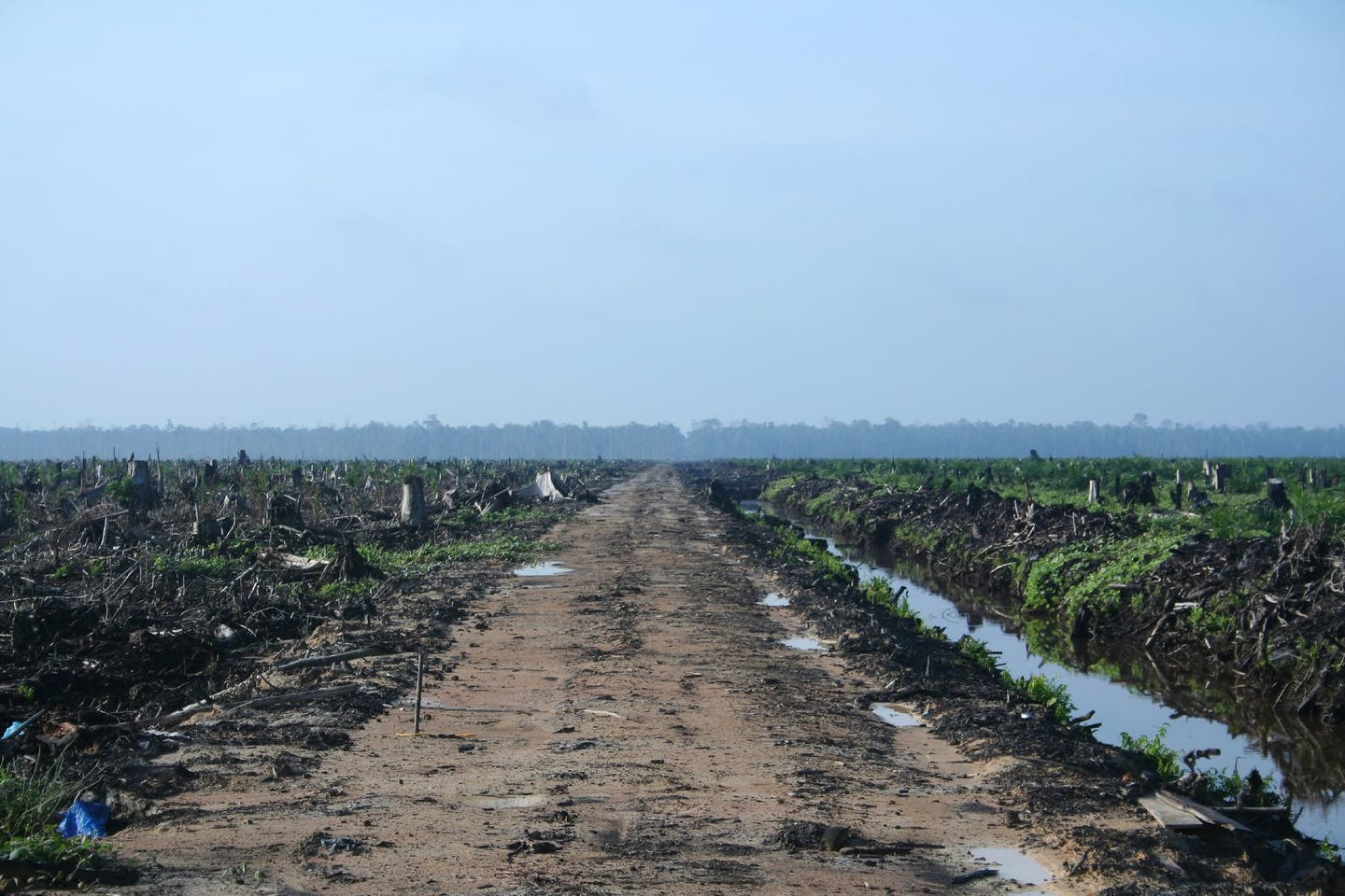 Deforestation, Riau, Indonesia