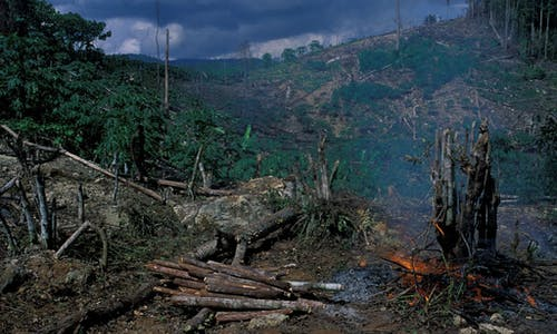 Humanity at crossroads, biodiversity report cards warn