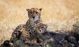 Unregulated by US at home, Facebook elevates wildlife trafficking abroad