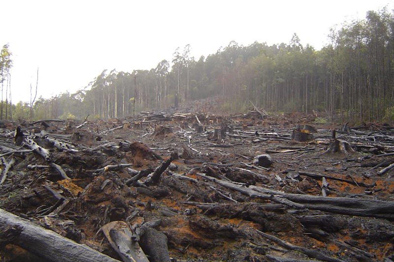 deforestation and destructive human practices