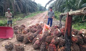 Certification fails to transform the palm oil industry–what next?