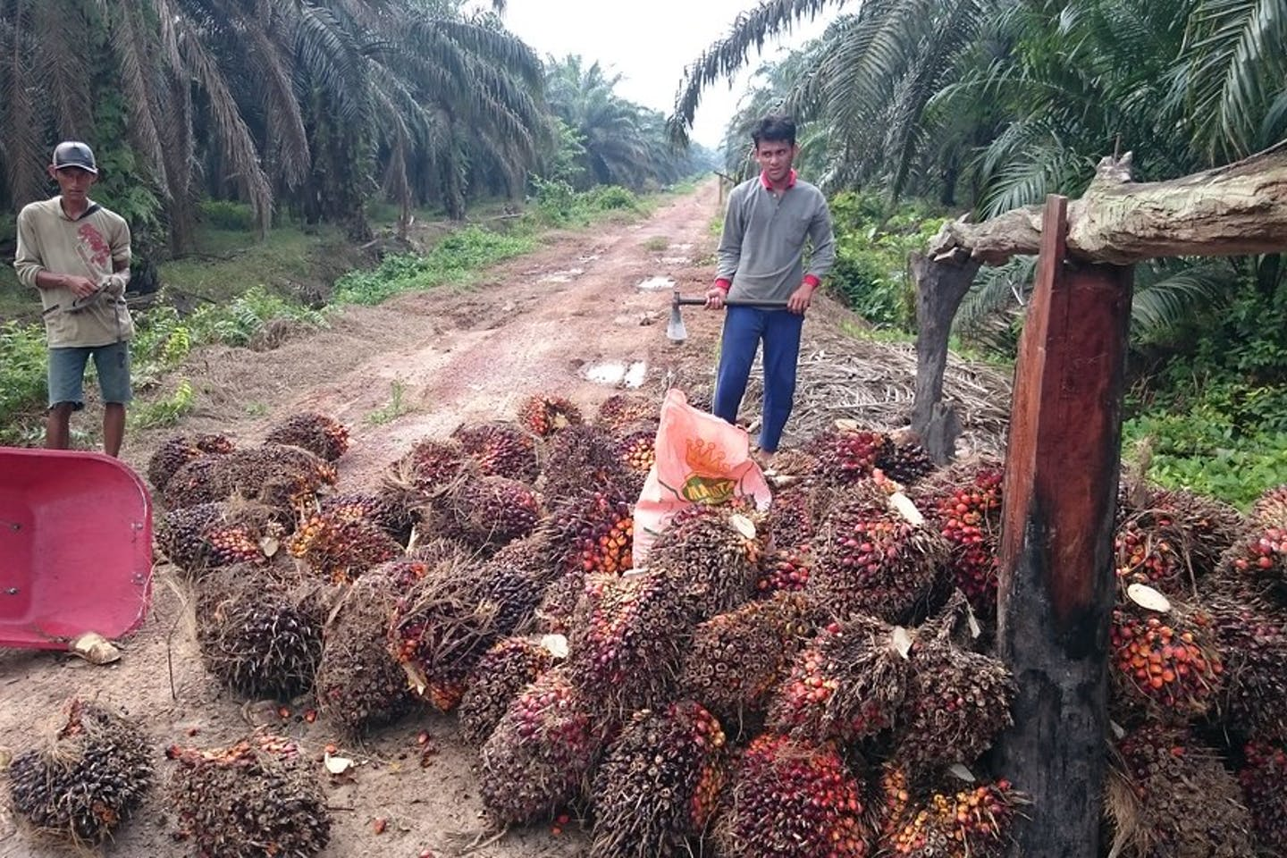 Workers on an RSPO-certified plantation in Jambi, Indonesia.