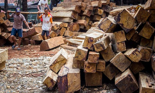 Just half of major timber and pulp suppliers committed to zero deforestation, new report finds