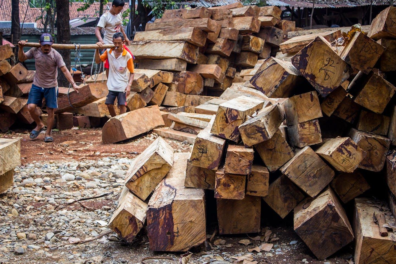 sawmill in Jepara, Indonesia