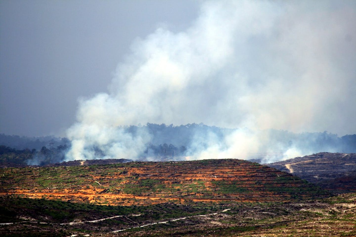 Forest fires in west Kalimantan2