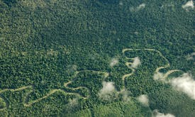 Malaysian firm bidding to clear Indonesian Papua forest loses land bid, but deforestation persists