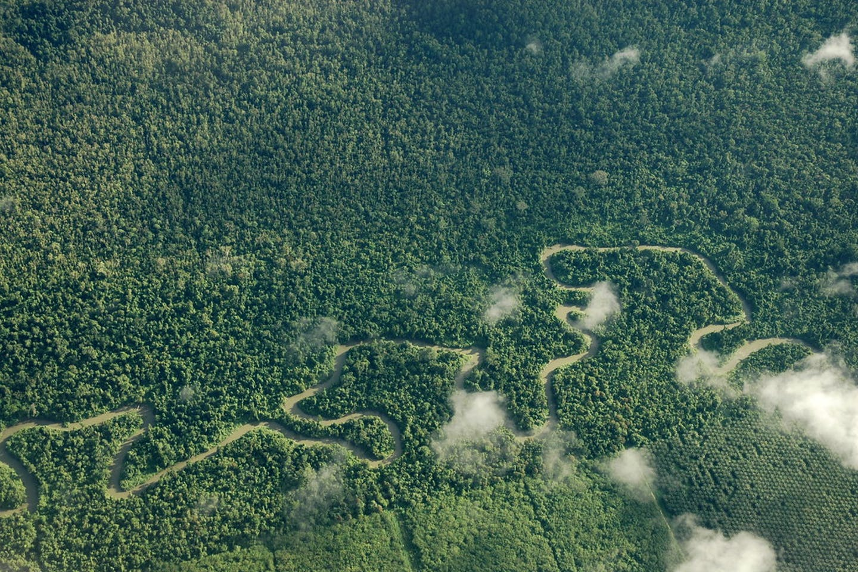 Rainforest in Papua province, Indonesia.
