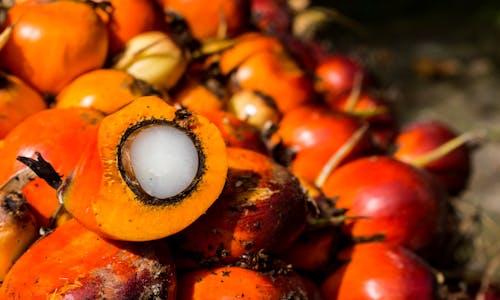 Can palm oil enter the circular economy?