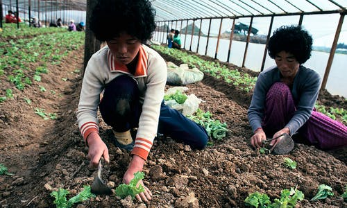 South Korea's farming culture points to the future for sustainable agriculture