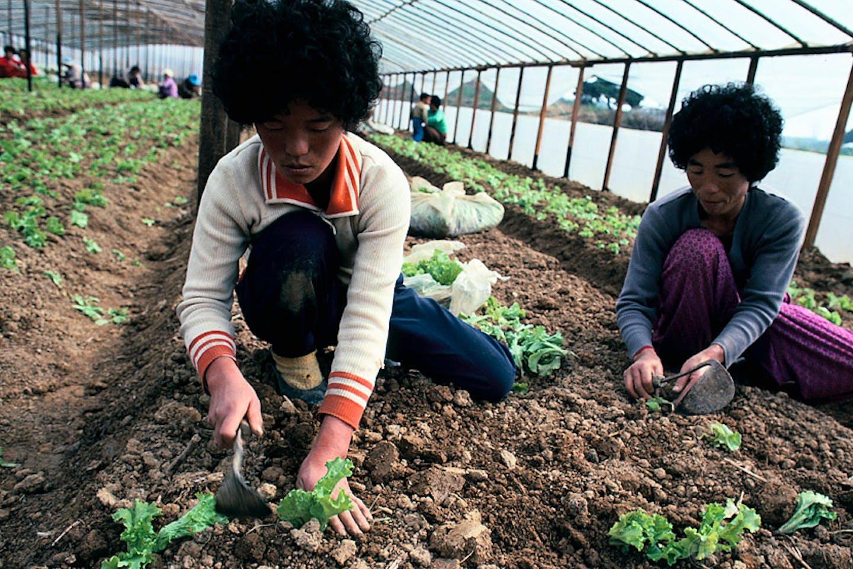 South Korea farmers