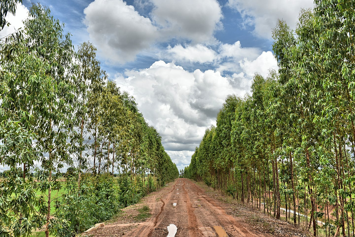 Trees line a dirt track in Thailand.