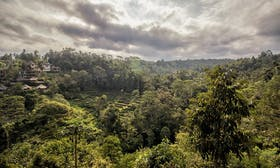 Indonesia set to receive US$56m payment from Norway for reducing deforestation