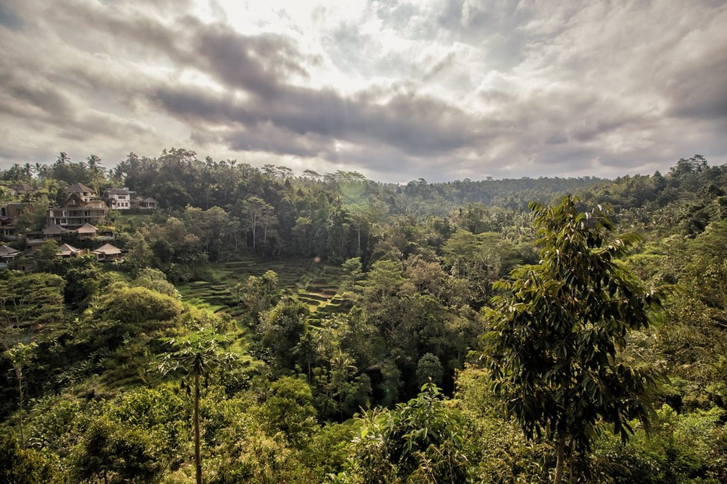 bali indonesia forest