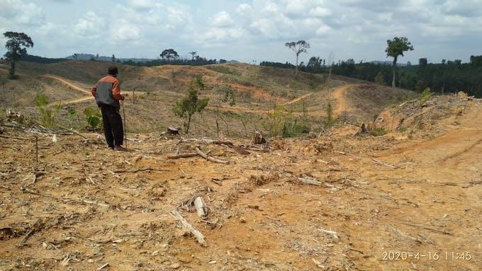 Photo showing damaged crops. Image: Walhi Jambi