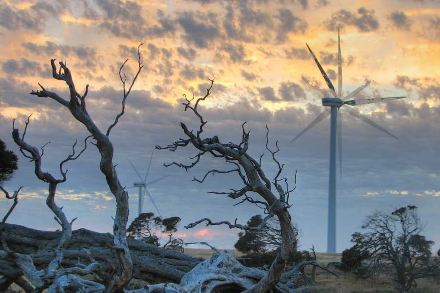 Millicent wind farm at sunrise in South Australia