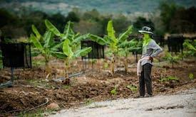 Thai social entrepreneurs helping ex-cons and farmers call for coronavirus cash