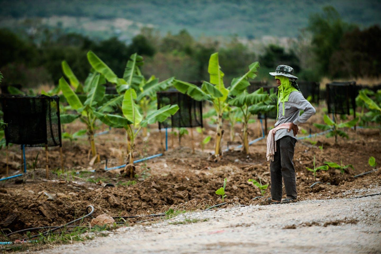 farmer thailand2