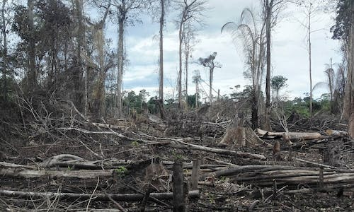 Next pandemic? Amazon deforestation may spark new diseases