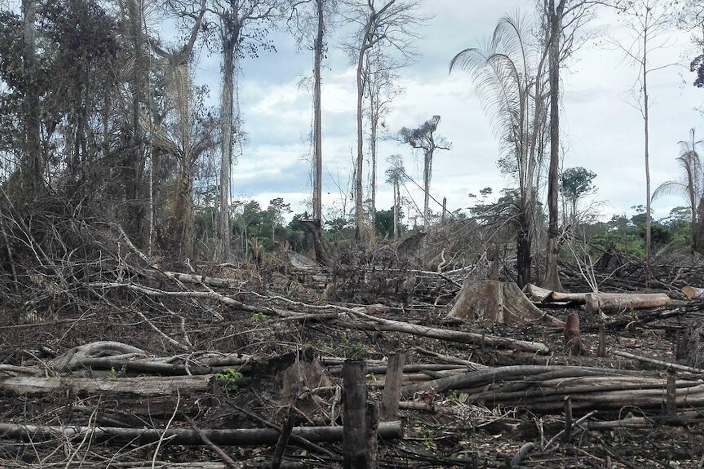 Small-scale deforestation in the Peruvian Amazon